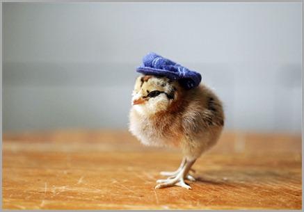 polluelo-con-sombrero