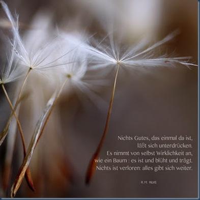 pusteblumen & Rilke