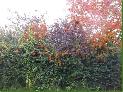 004  Autumn colours