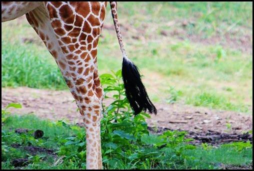 Zoo6 185