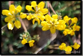 Flores (2)