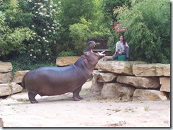 2005.05.18-013 repas des hippopotames
