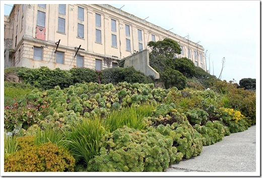 120408_Alcatraz_245