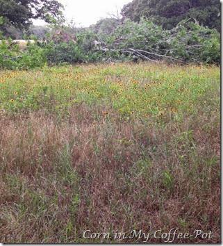 Susans field