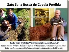 Gato-Sai-a-Busca-de-Cadela-Perdida_t