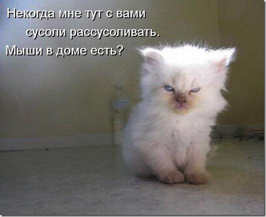 kotomatritsa_dT