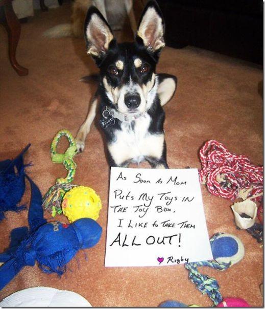 dog-shaming-bad-17