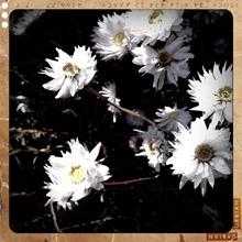 12. flowers