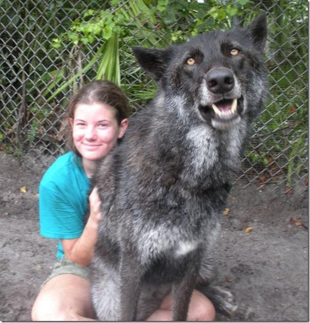CÃO lobo (2)