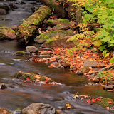 Little Carp River in the Fall # 2 / Porcupine Mountains / Upper Michigan