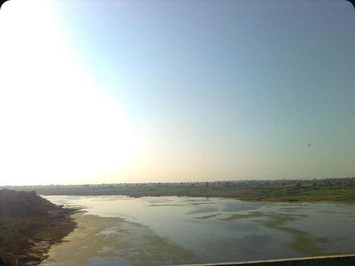 Gharial Chambal_River_in_Kota_4