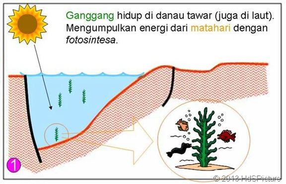 proses pembentukan minyak bumi 1