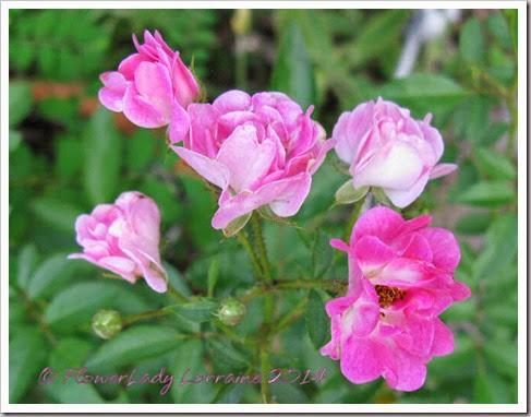 06-30-noid-pink-mini2