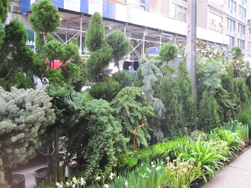 I love the tall spiral bushes -- perfect for balconies.