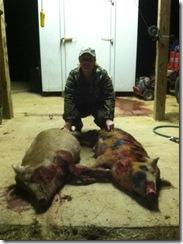 sb 2 hogs