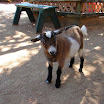 New Orleans - Audubon Zoo