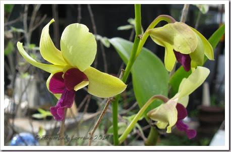 03-28-orchids2