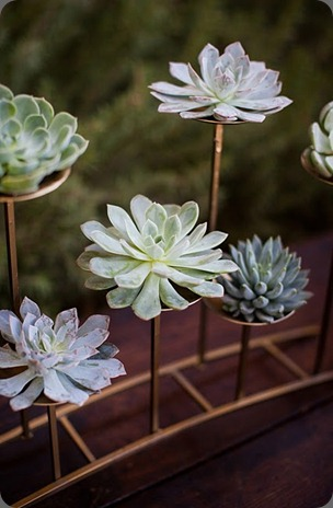 B 2 Succulents on stand heavenly blooms