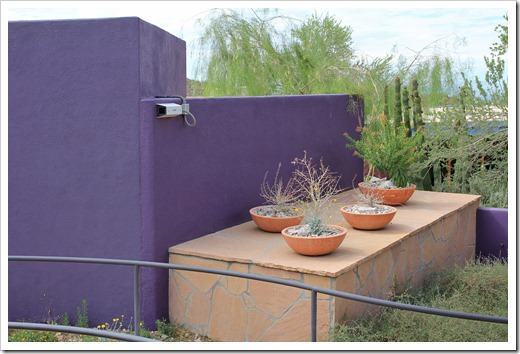 120728_ArizonaSonoraDesertMuseum_Idria-columnaris_12