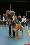 20130510-Bullmastiff-Worldcup-0218.jpg
