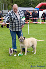 20100513-Bullmastiff-Clubmatch_31134.jpg