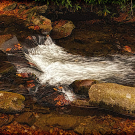 Moving by Lowell Griffith - Nature Up Close Water ( water, stream, moving, rocks, whitewater )