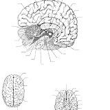 Cerebro para completar con los nombres