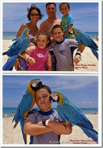 family macaw, parker macaw