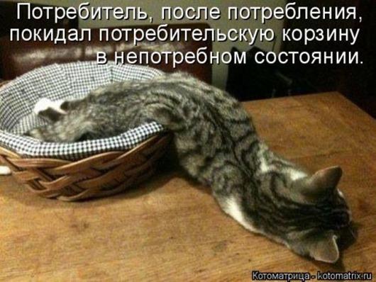 1410530188_kotomatricy-15