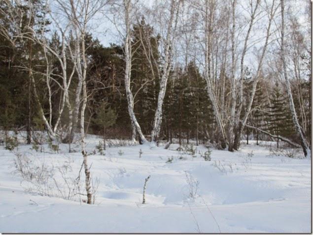 Лыжи 144