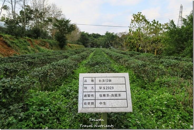 新店 文山農場 (29)