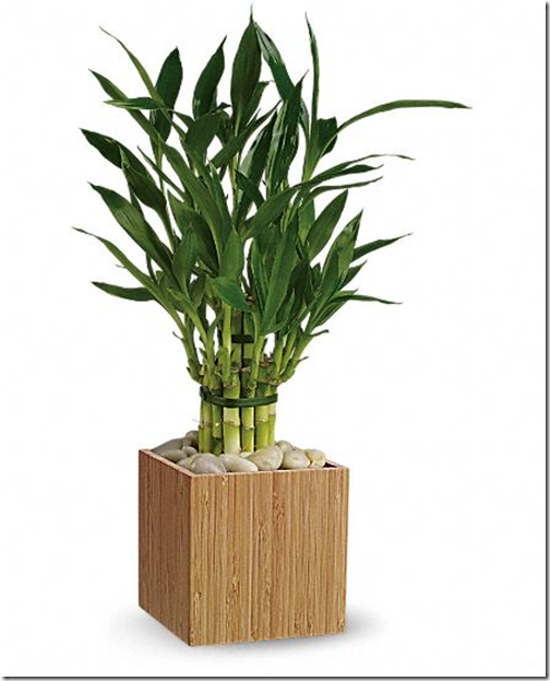 Elegant Nest 10 Easy Care Houseplants