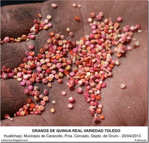 Granos de Quinua Real variedad Toledo -LaQuinua.blogspot.com-Ruben Miranda