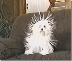 Static Cling Dog Looks Like White Porcupine
