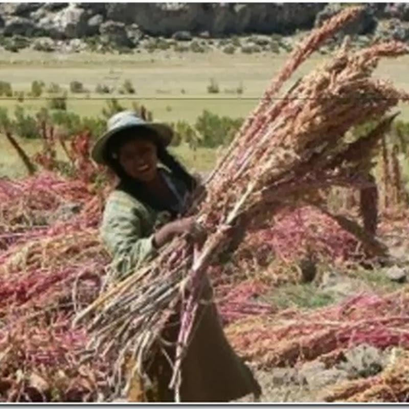Tahua: municipio potosino (Bolivia)