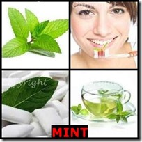 MINT- 4 Pics 1 Word Answers 3 Letters