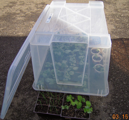 "Clear plastic tub ""greenhouse"" - $4.00 at IKEA (+$2 for the lid)"