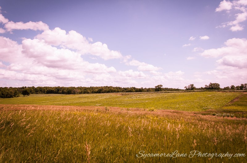 SycamoreLane Photography-field