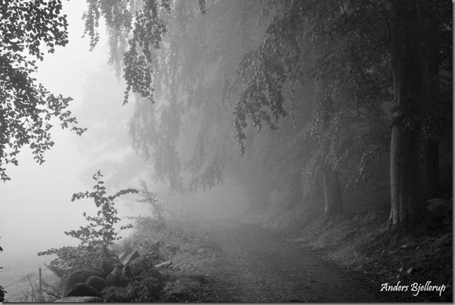 Misty 1