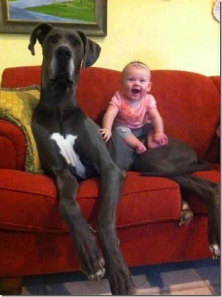dogs-kids-best-friend-6