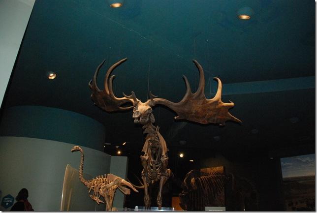 11-12-12 B Museum Of Natural History 028
