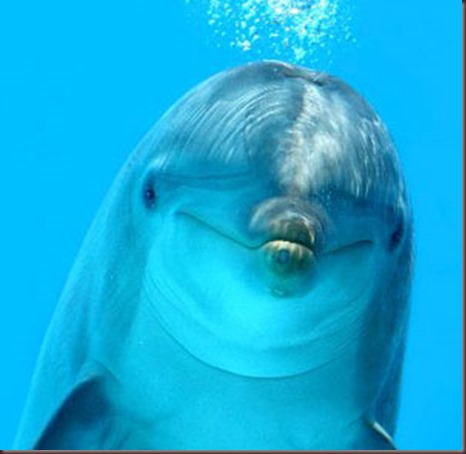 Amazing Animals Pictures Dolphin (10)