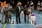20130510-Bullmastiff-Worldcup-1293.jpg