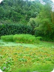 jardin d'eau vaipahi