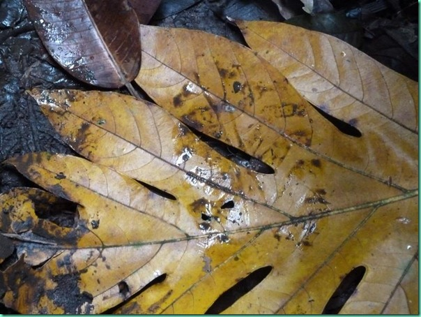 yellow leaf footprint