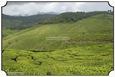 MNR_331_DSC0171_www.keralapix.com