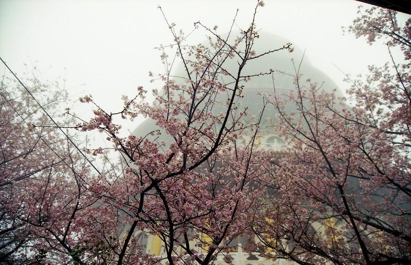 天元宮~霧濛濛雨綿綿~