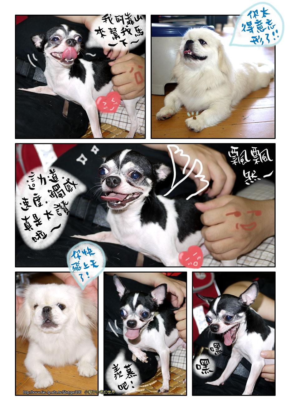 dog_blog5.jpg