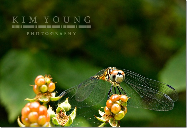 Dragonfly-smile-web