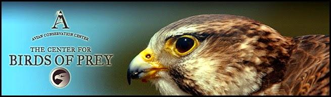 05 - Bird of Prey Header